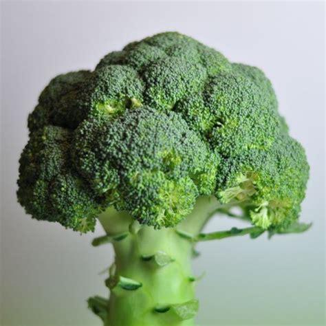 cuisiner le brocolis comment cuisiner des brocolis 28 images le gratin de