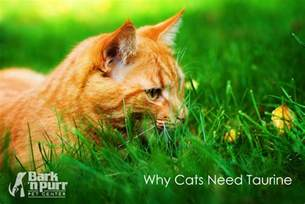taurine for cats why cats need taurine bark n purr