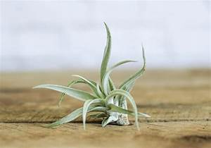 10 Things Nobody Tells You About Air Plants