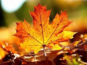 Autumn Leaves Background - WallpaperSafari
