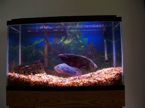 fish tank 29 gallon jake s 29 gallon planted tank
