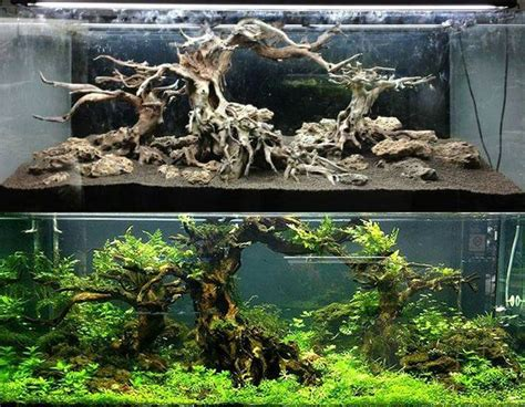 Freshwater Aquascaping Designs - 3102 best aquascape images on aquascaping