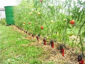 Arrosage Des Tomates : arrosage goutte goutte iriso kit jardin potager ~ Carolinahurricanesstore.com Idées de Décoration