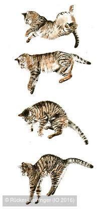 welt der katzen test  von