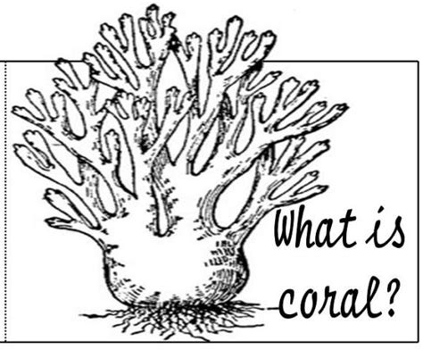 coral  nature printable coloring pages