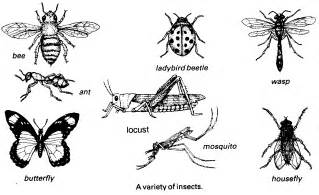 Clip Art Bugs and Insects Diagrams
