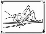 Pages Grasshopper Coloring Print Grasshoppers Clipart Popular Library Device Computer Then sketch template