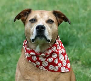 how to make dog bandanas dogs things