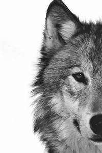 Half wolf head | wolves// | Pinterest | Beautiful, Last ...