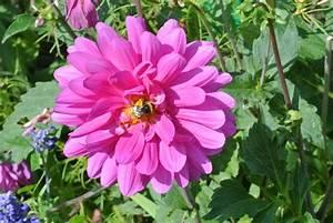 Pink Daisies Flowers | Shining Stuff - Hd Wallparers - Top ...