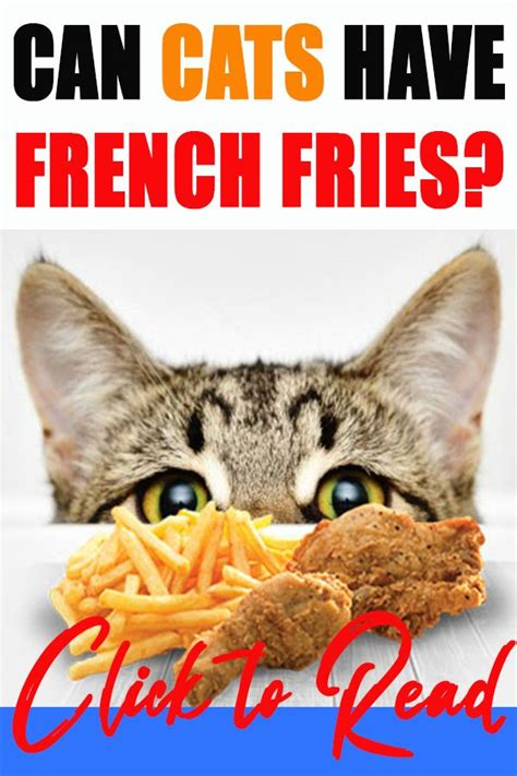 can cats eat chips