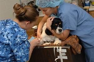 Bacheloru2019s Degree Programs In Veterinary Medicine