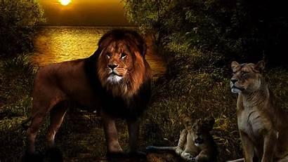 Lions Lion 3d Google Screen Wild Play
