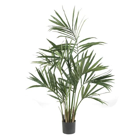 5 kentia palm tree potted 5307