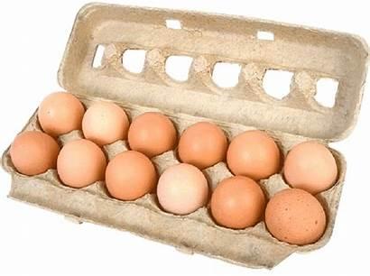 Carton Eggs Egg Cost Using Living Ou