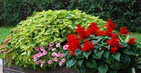 Plante De Jardinière by Jardini 232 Re Quatre Saisons De Plantes Dossier