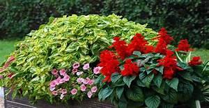 plantes vivaces pour jardinieres exterieures simple With idees de terrasse exterieur 9 areca entretien arrossage et rempotage