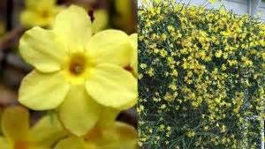 fiori di san giuseppe 10 fiori da balcone invernali