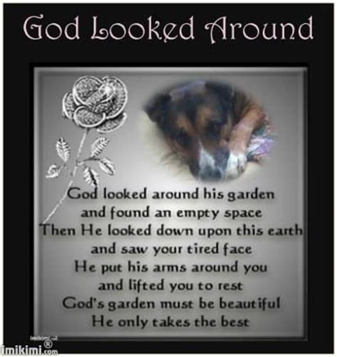 animals   heaven images  pinterest doggies