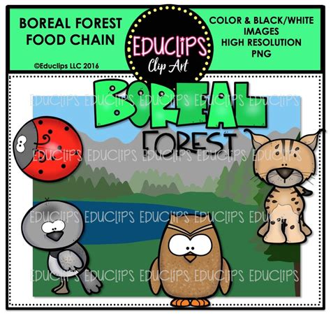 boreal cuisine boreal forest food chain clip mini bundle color and b
