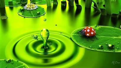 Pad Lily Wallpapers Ladybug Dew Lilypad Drops