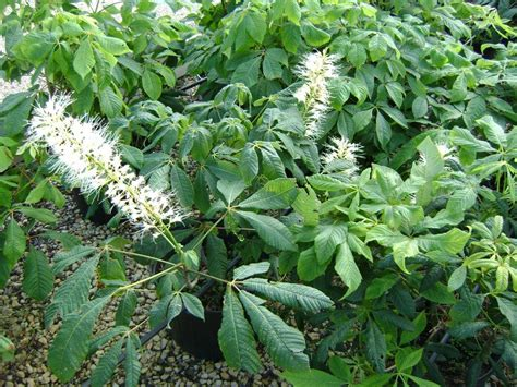 Nursery Plants Online by Native Plants Mariani Plants