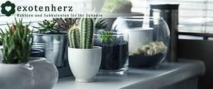 Tillandsien Im Glas : exotenherz exotische pflanzen f r ihr zuhause ~ Eleganceandgraceweddings.com Haus und Dekorationen