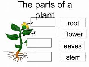 Parts Of A Plant  From Sae