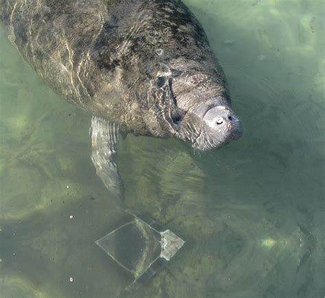 Everglades Boat Tours Near Fort Myers by S W Fla Manatee Eco River Tours Florida Coupons And