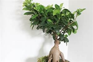 Entretien Plante Verte : plante d interieur grimpante digpres ~ Medecine-chirurgie-esthetiques.com Avis de Voitures