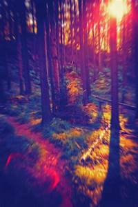 trippy forest | Tumblr