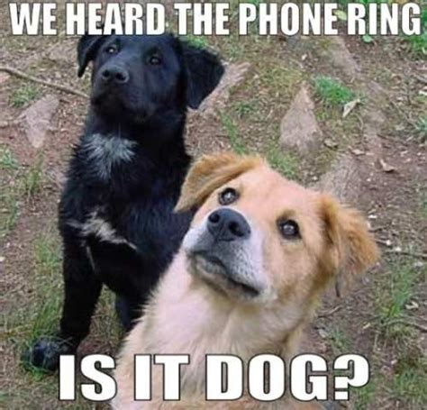 Dog Phone Meme - hello yes this is dog all quot hello this is dog quot memes indeed pinterest it is lol