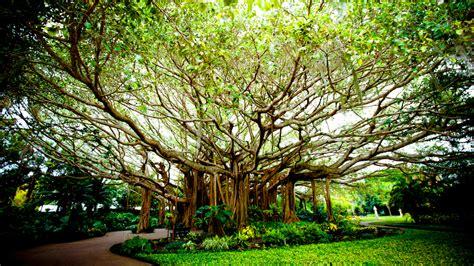 cypress gardens fl cypress gardens celebrates 80 years of florida charm