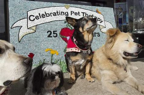 woody pet therapy program celebrates  anniversary