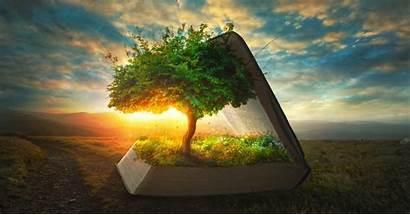 Genesis Bible Read Should Why August Tree