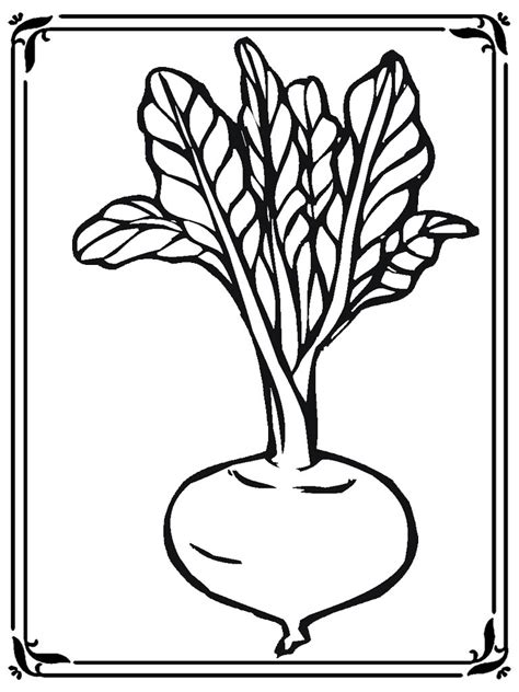 coloring pages  turnip realistic coloring pages