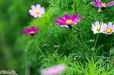 Image result for trang hình động hoa và chim đẹp