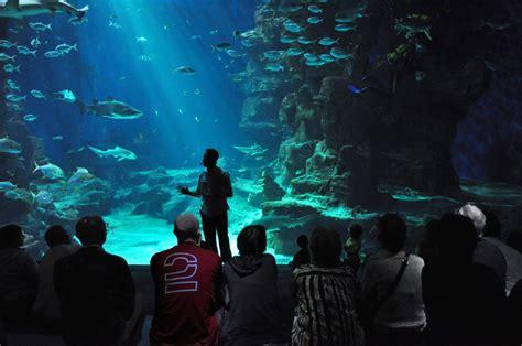 aquarium mare nostrum montpellier aquarium mare nostrum gite search