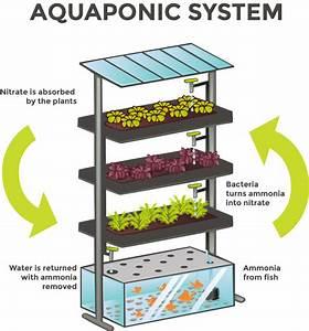 A Geat Source Of Organic Vegetables  U2013 The Aquaponics