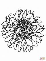 Sunflower Silhouettes Coloring Printable Pages Jooinn Cool Head sketch template