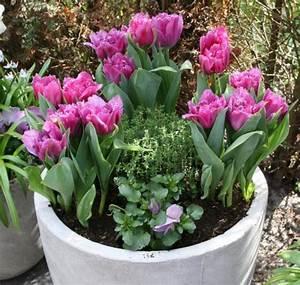 Tulpen Im Topf In Der Wohnung : 10 tipps f r sch nere tulpen mein sch ner garten ~ Buech-reservation.com Haus und Dekorationen