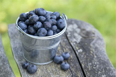 what can you make with blueberries make blueberries your summer superfood