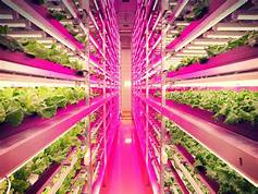 Abandoned Coal Mines May Soon Be Transformed into Perfectly Efficient Indoor Farms…