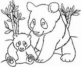 Coloring Pandas Pages Panda Cute Children Colouring Kung Fu Animals Ll These Justcolor sketch template
