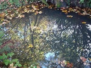 Photos of Million Daisy Farm, my meadow, rainforest and ...
