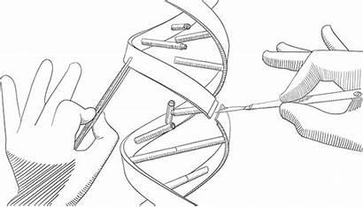 Gene Editing Genetic Engineering Crispr Drawing Technology