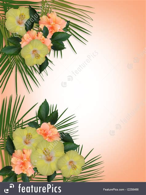 templates tropical hibiscus flowers border stock