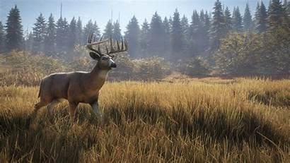 Deer Whitetail Wild Call Thehunter Hunter Cotw