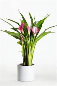 Plante D Intérieur Haute : plantes d 39 int rieur qui fleurissent l 39 hiver ~ Premium-room.com Idées de Décoration