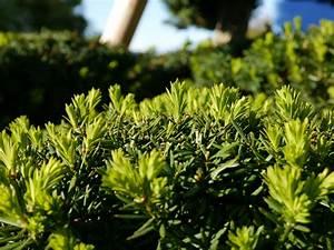 Bäume Schneiden Wann : b ume schneiden wann wann soll man die baeume schneiden ~ Lizthompson.info Haus und Dekorationen